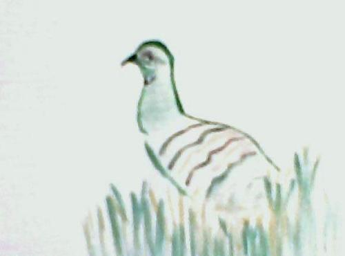 patridge