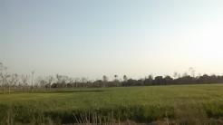 near Bank of Chenab