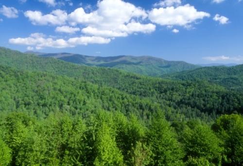 forestas.jpg
